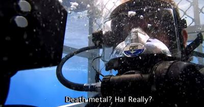 Великі білі акули виявилися фанатами металу