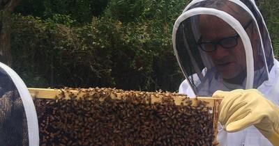 Флі з RHCP став бджолярем