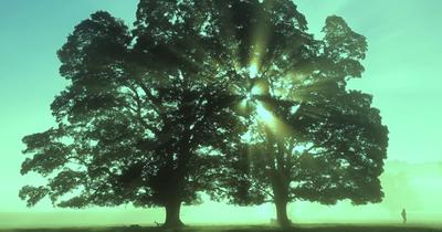 Stone Sour опублікували нове відео
